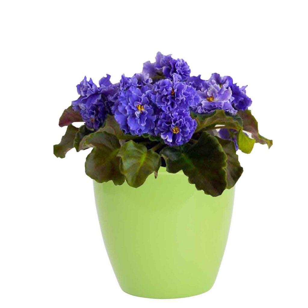 Best Pot For African Violet