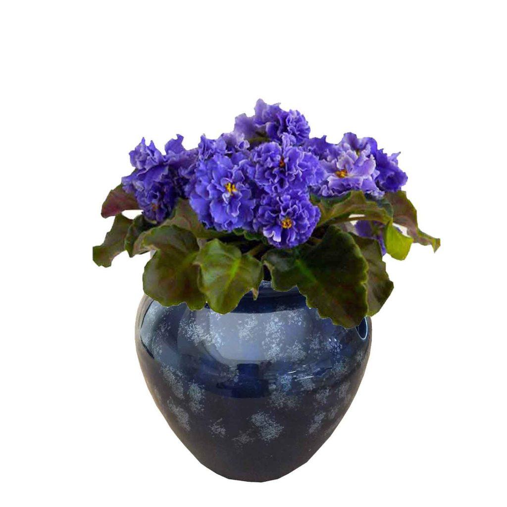 Best African Violet Pots