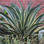 Best pots for snake plants