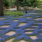 6 Best Low Growing Groundcover For Shade 2020 Buyer's Guide