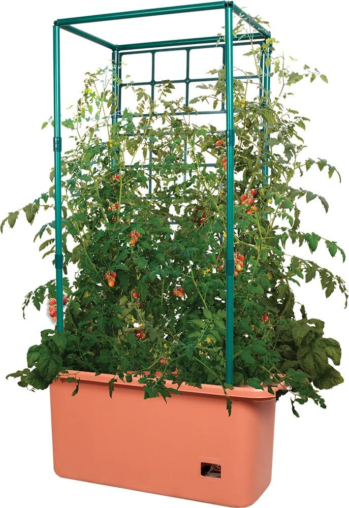 planters for tomat