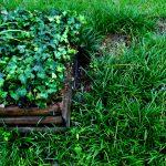 8 Best Fertilizer for Bermuda Grass 2020 Ultimate Guide