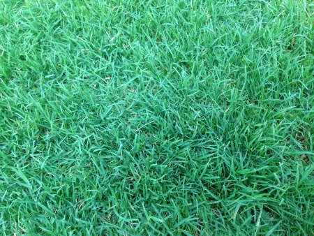 Best wee and feed for Bermuda grass